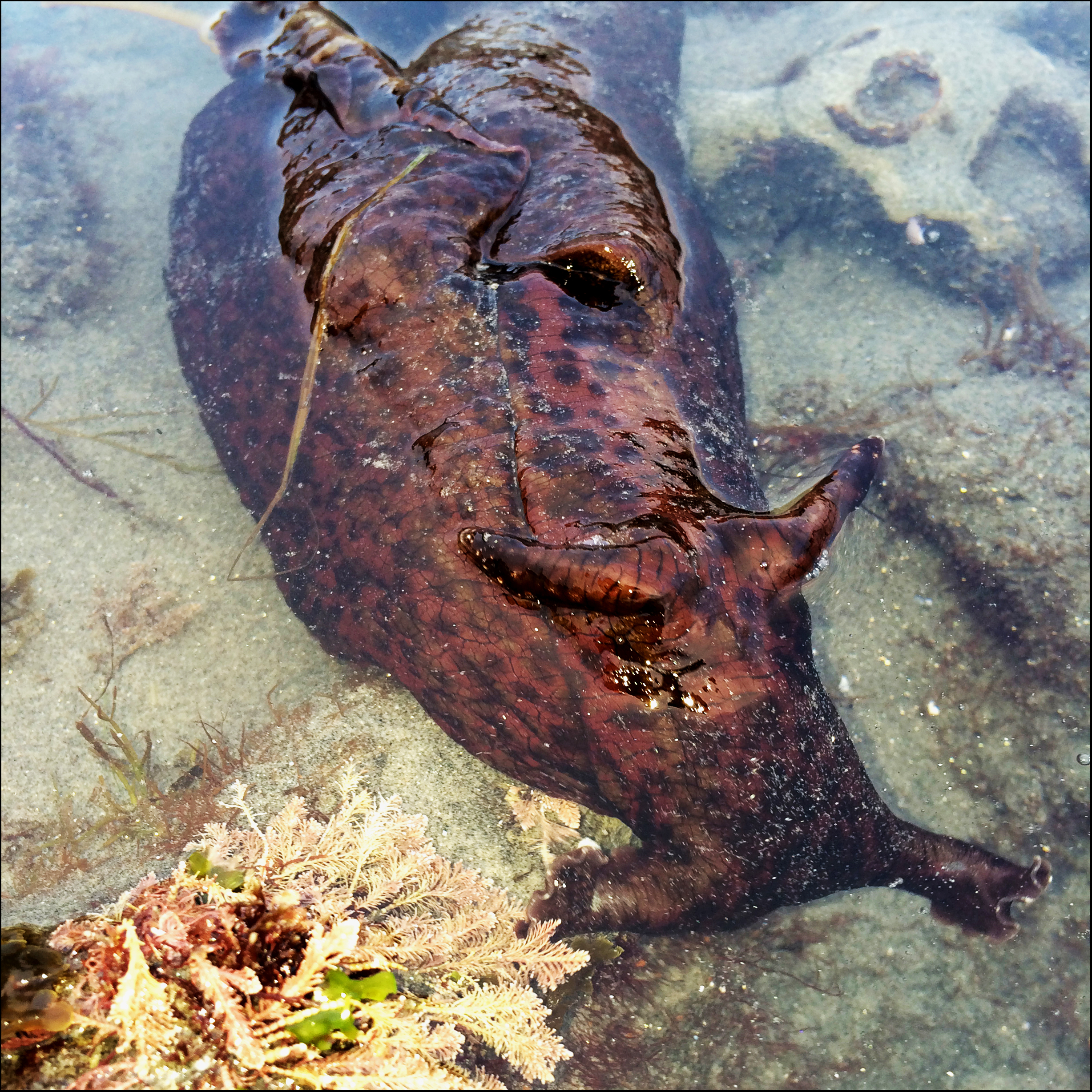 Garbage Dumps in Ocean Dumped Into Our Oceans